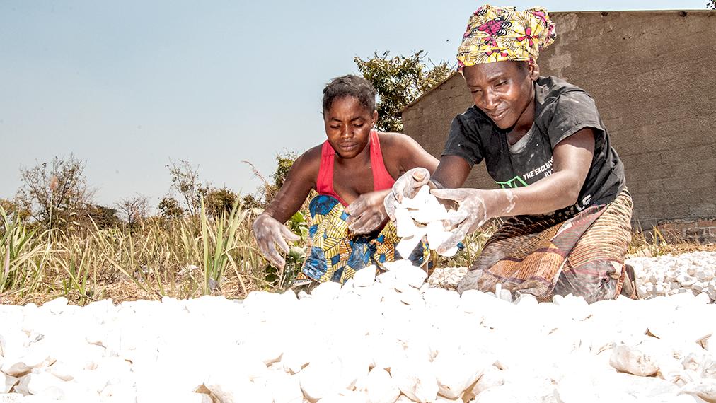 Cassava Farmers